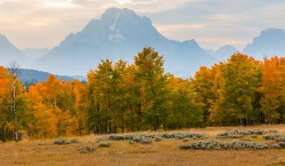Mt Moran and Autumn Aspen trees - Grand Teton National Park