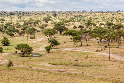 Tarangire National Park (photo by Kerry Brooks)