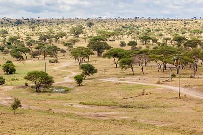 Tarangire National Park (photo by Kerry Brooks)