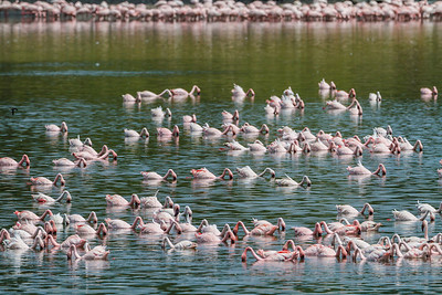 Lesser Flamingos, Arusha National Park