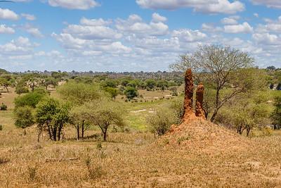 Termite hills, Tarangire National Park
