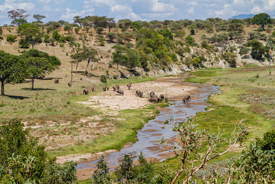 Elephants are one of the highlights of Tarangire National Park