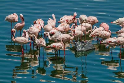Lesser Flamingos, Arusha National Park