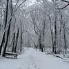 April 09 - Camp Pine Woods hike