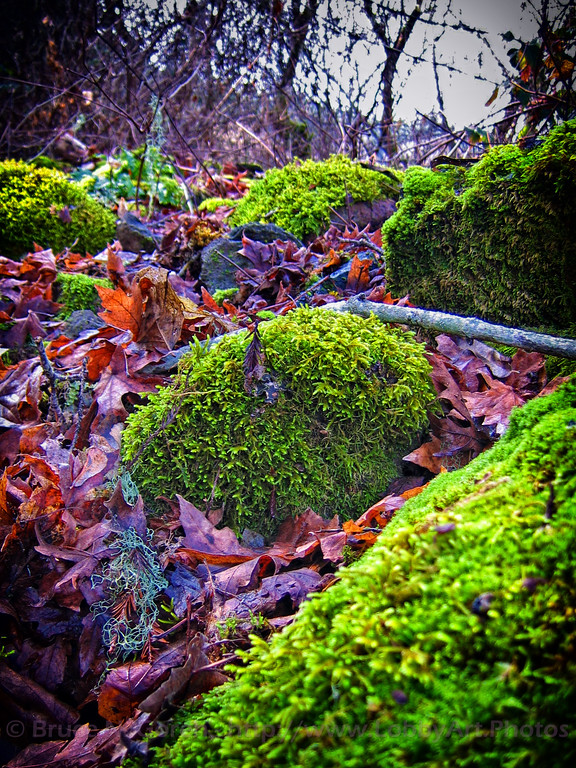Moss Islands in a Leaf River