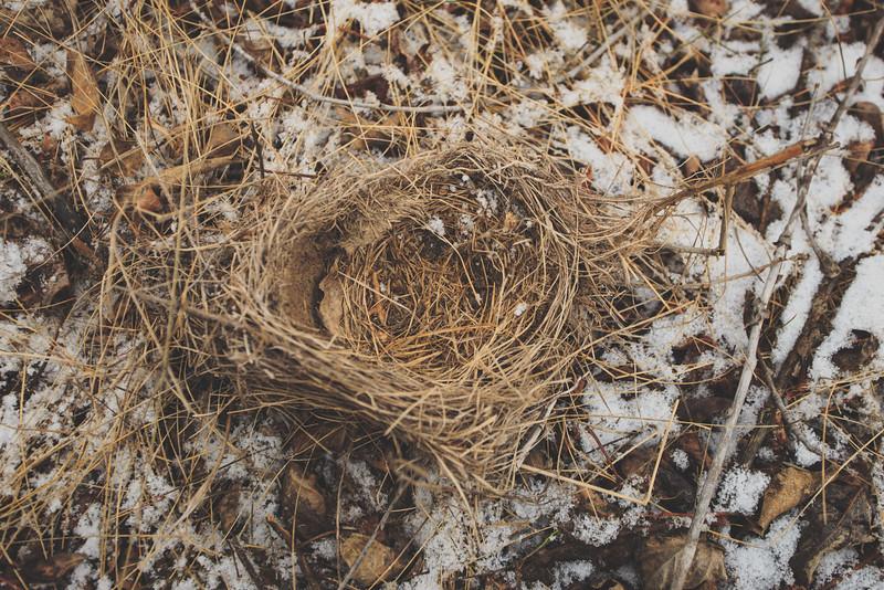 Birds nest. 8105