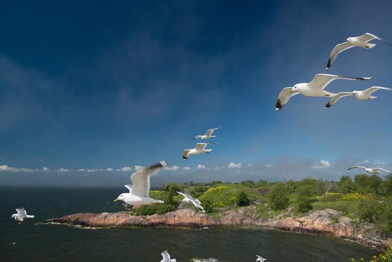 Seagulls, Suomenlinna