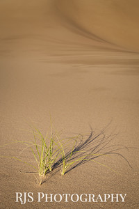 Grasses from Sands