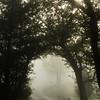 Foggy Arch