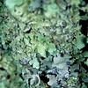 Taken a Lichen To It