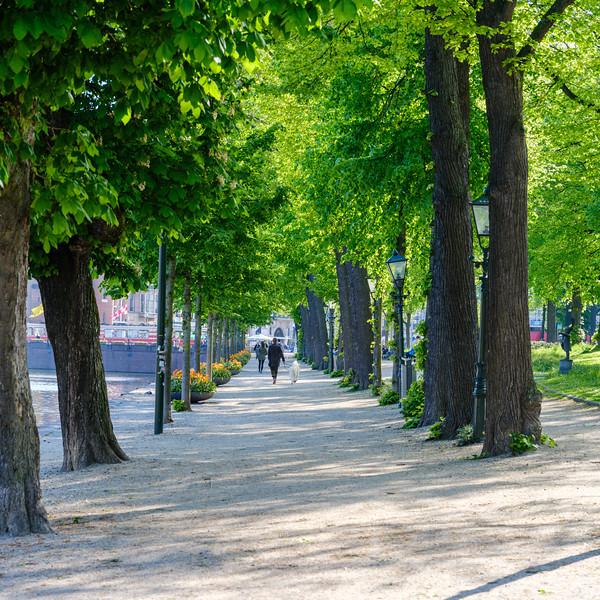 Tree lined walk along the Hofvijver
