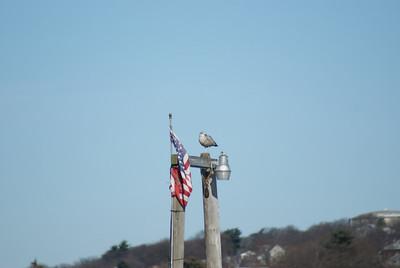 Light pole stand...