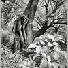 Old Wild Tree