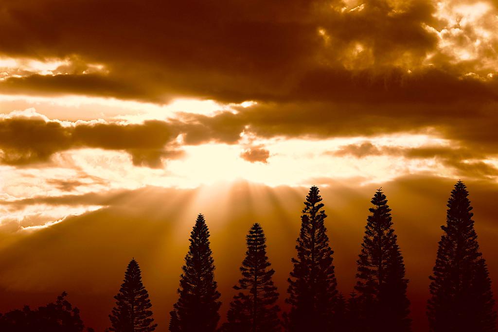 Pukalani Golden Rays