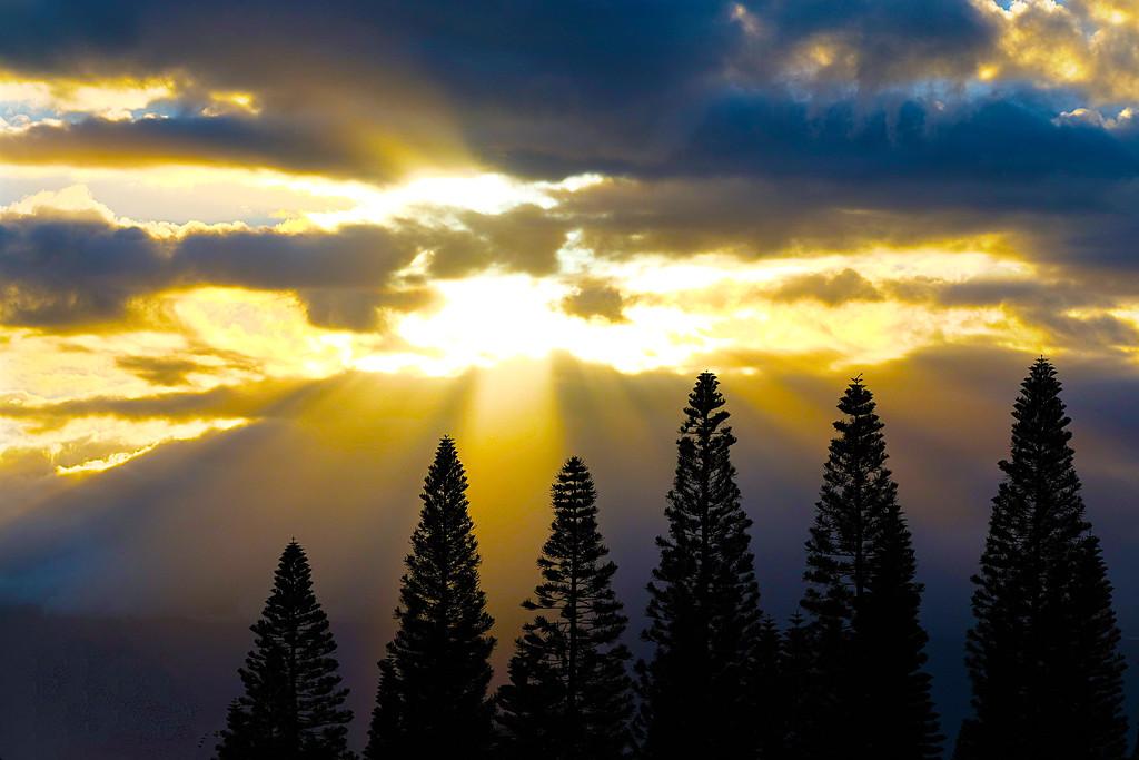 Pukalani Sun Ray