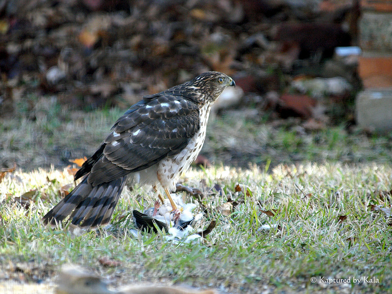 The Hawk and the Dove 21