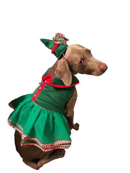 Dog 1