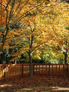 Corner of color. October 26, 2006