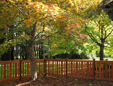 Back yard fall colors. October 20, 2006
