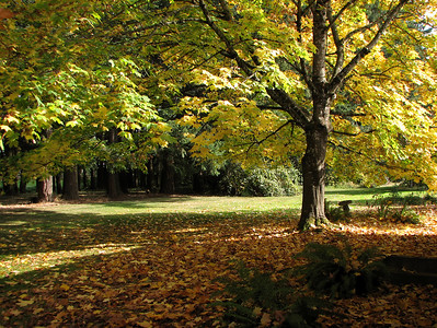 Part of our backyard and the greenspace beyond. October 26, 2006