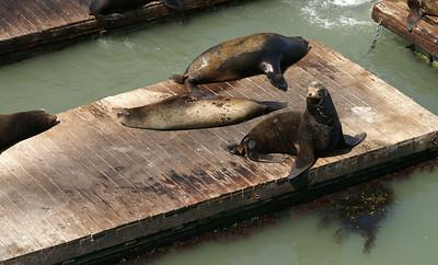 Sea lions...