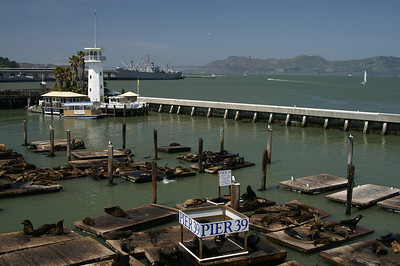 Sea lions at Pier 39.  Golden Gate Bridge in the background.