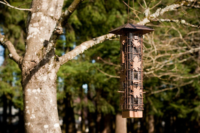 "Trying a new ""squirrel-free"" bird feeder.  Let's hope it works!"