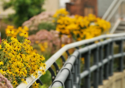 High Line In Bloom