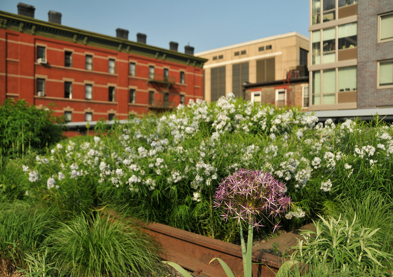 High Line Star-of-Persia