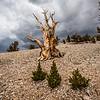 Ancient Bristlecone Pine Forest Bishop Lone Pine California 45Epic Dr. Elliot McGucken Fine Landscape and Nature Photography
