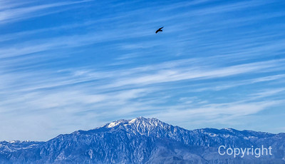 San Jacinto from Quail Mountain