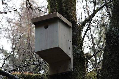Bird Box 3 close up
