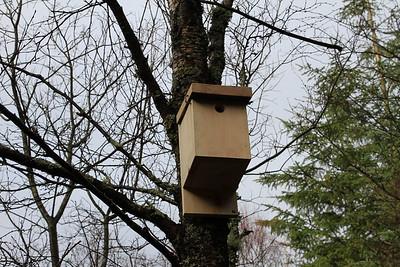 Bird Box 4 close up
