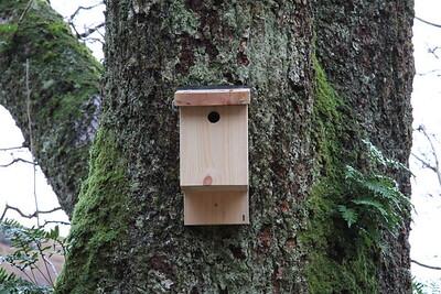 Bird Box 1 close up