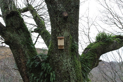 Bird Box 1