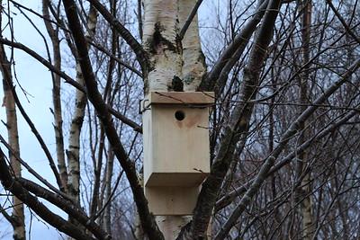Bird Box 6 close up