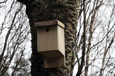 Bird Box 2 close up