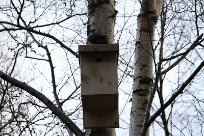 Bird Box 5 close up
