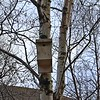 Bird Box 5