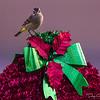 Sparrow Christmas