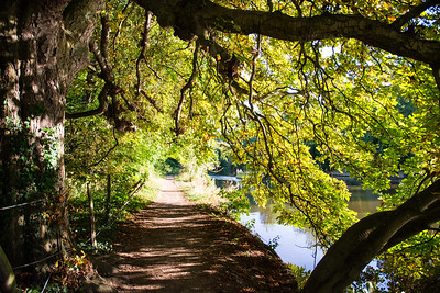 Thames Path at Goring
