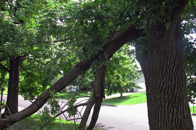 The latest round of storms we just experienced probably didn't do the tree any favors.