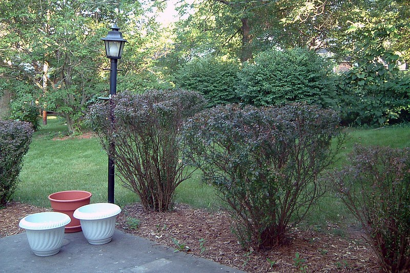 The patio is surrounded by a number of large bushes.