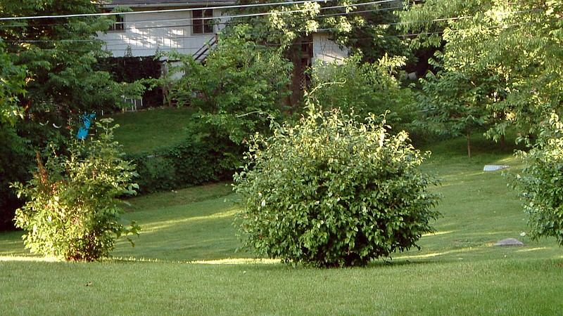There are also a number of bushes at the property line.