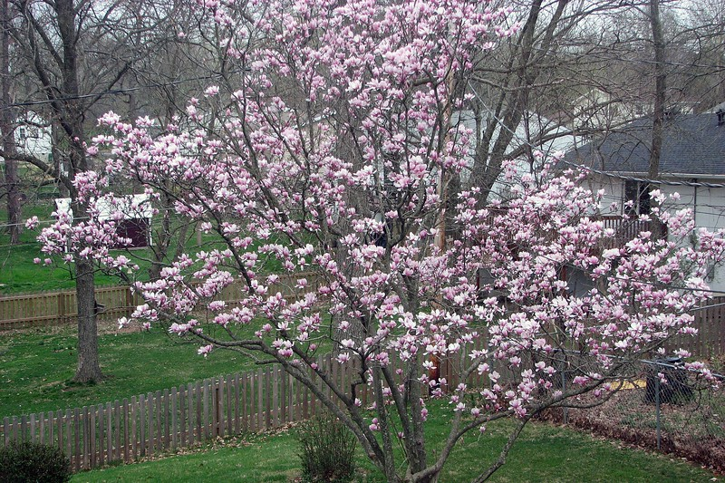 The spare bedroom window offers a great view of a flowering tree in the backyard that looks beautiful each spring.