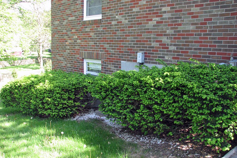 The side yard bushes look fine.