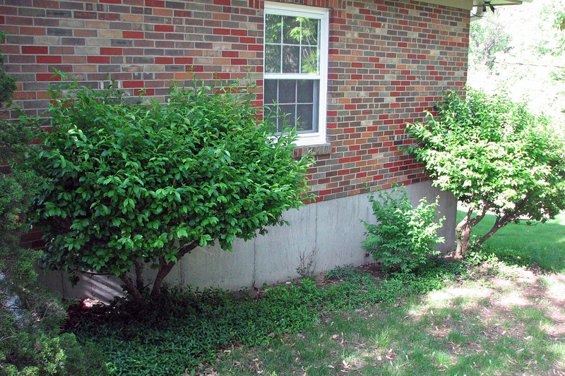 Bushes on the garage side of the yard.