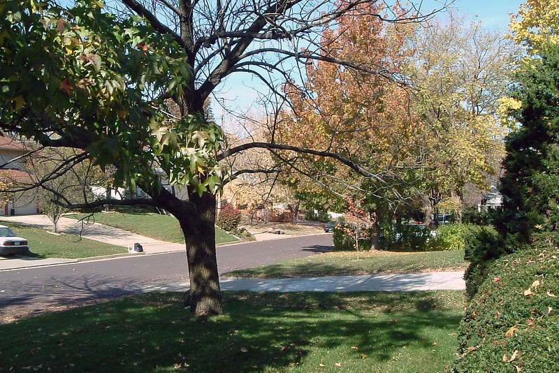 Late October in Columbia, Missouri, and not a snowflake in sight.