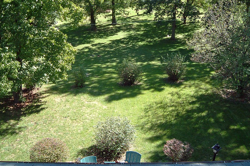 I discovered that the roof of the house offers a great view of the backyard.