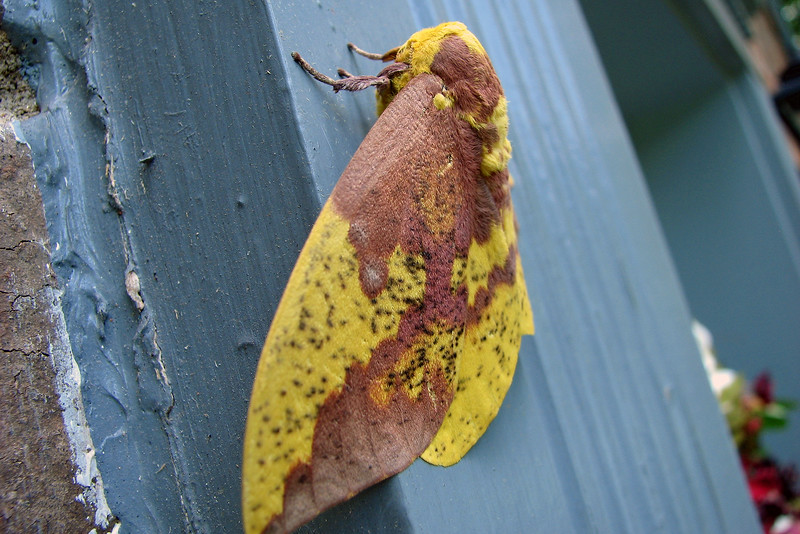 This colorful guy was hanging out at my front door.